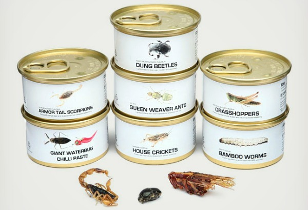 Edible-Bugs-Gift-Pack