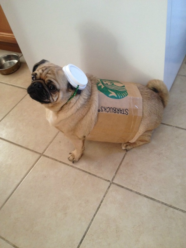pug-latte