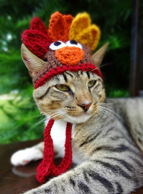 turkey-cat-2