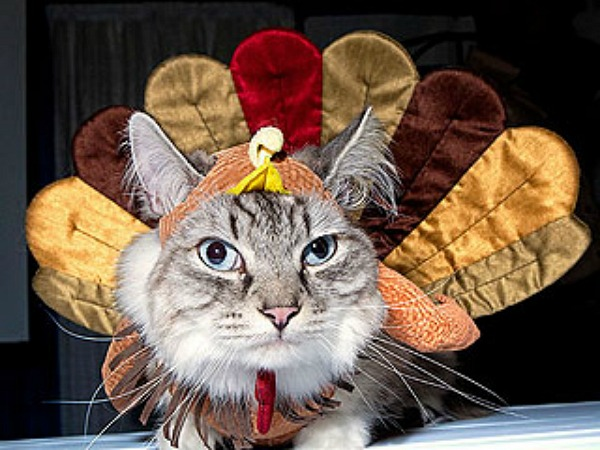 turkey-cat-3