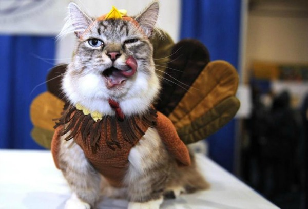 here are 12 unamused cats and dogs dressed as turkeys