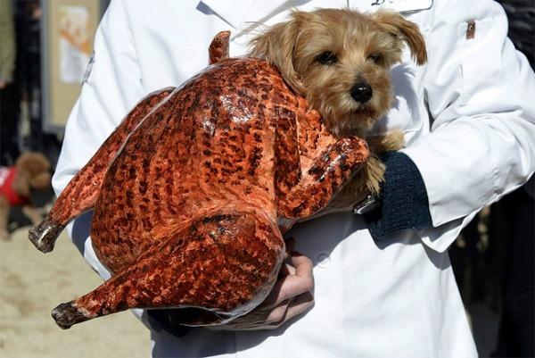 turkey-cat-6