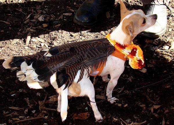 turkey-pet-2