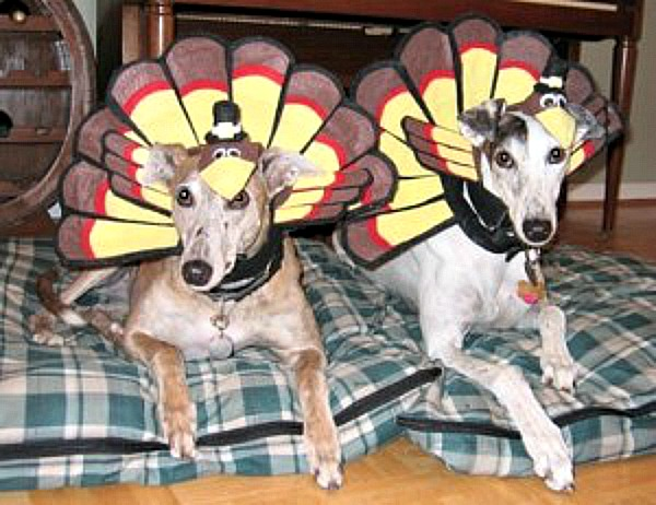 Worst Thanksgiving Food For Dogs