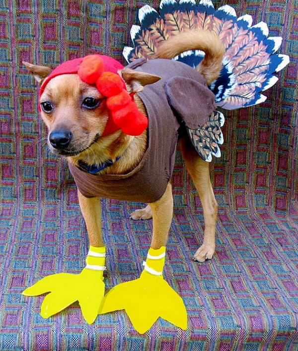 turkey-pet-4