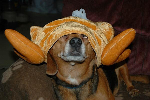 turkey-pet-8