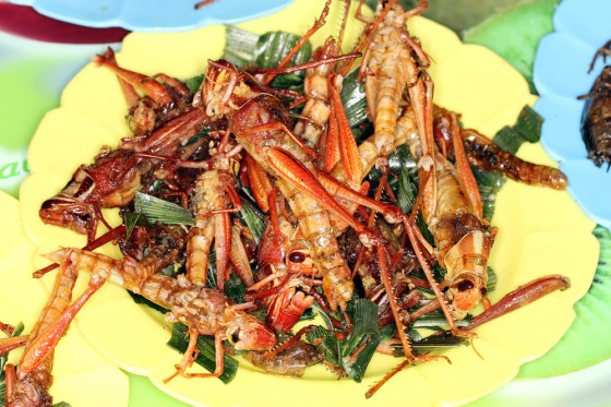 Fried-Grasshoppers-560x373