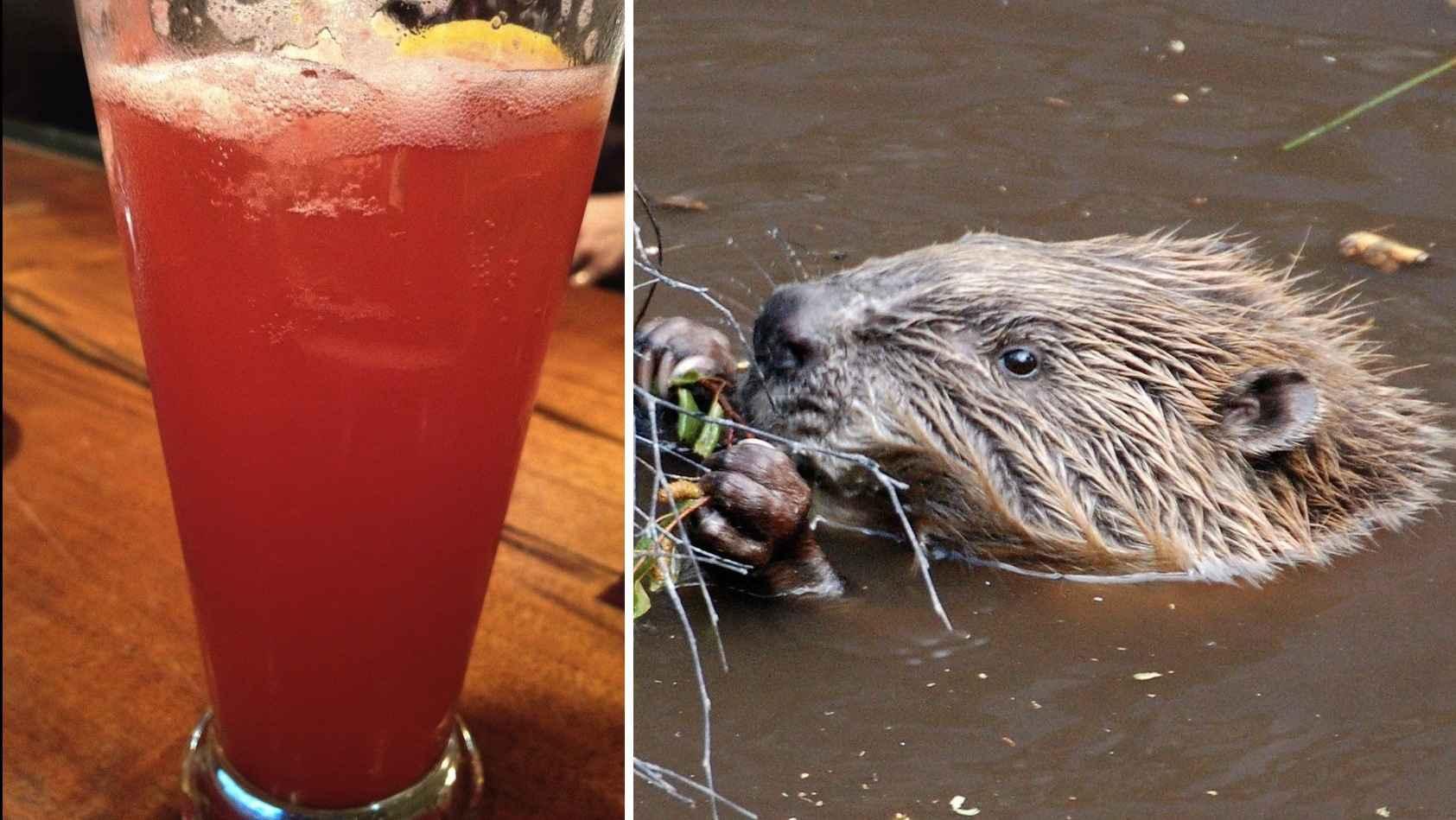 beaver-butt-juice