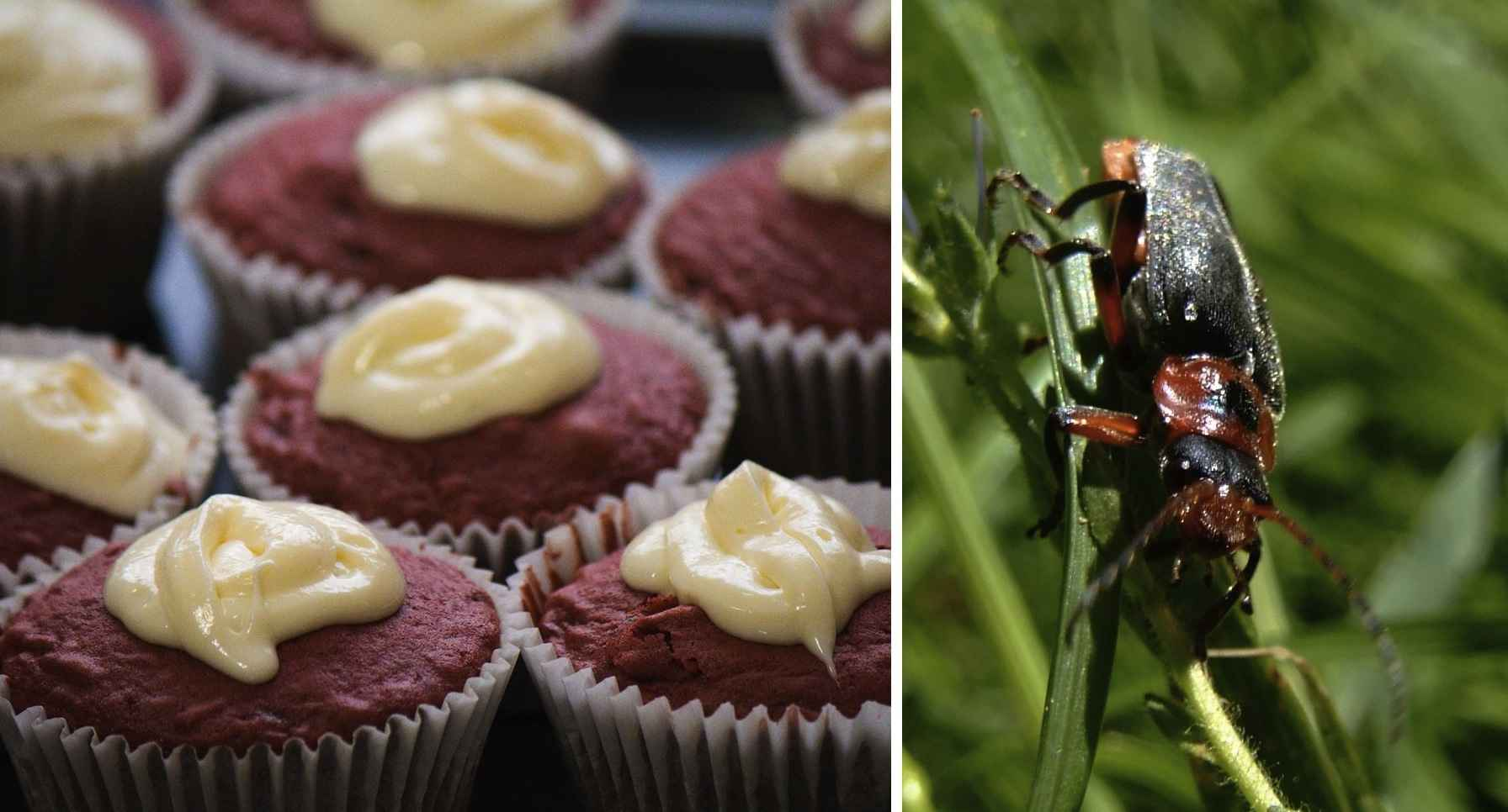 What Makes Red Velvet Cake Red Beetles