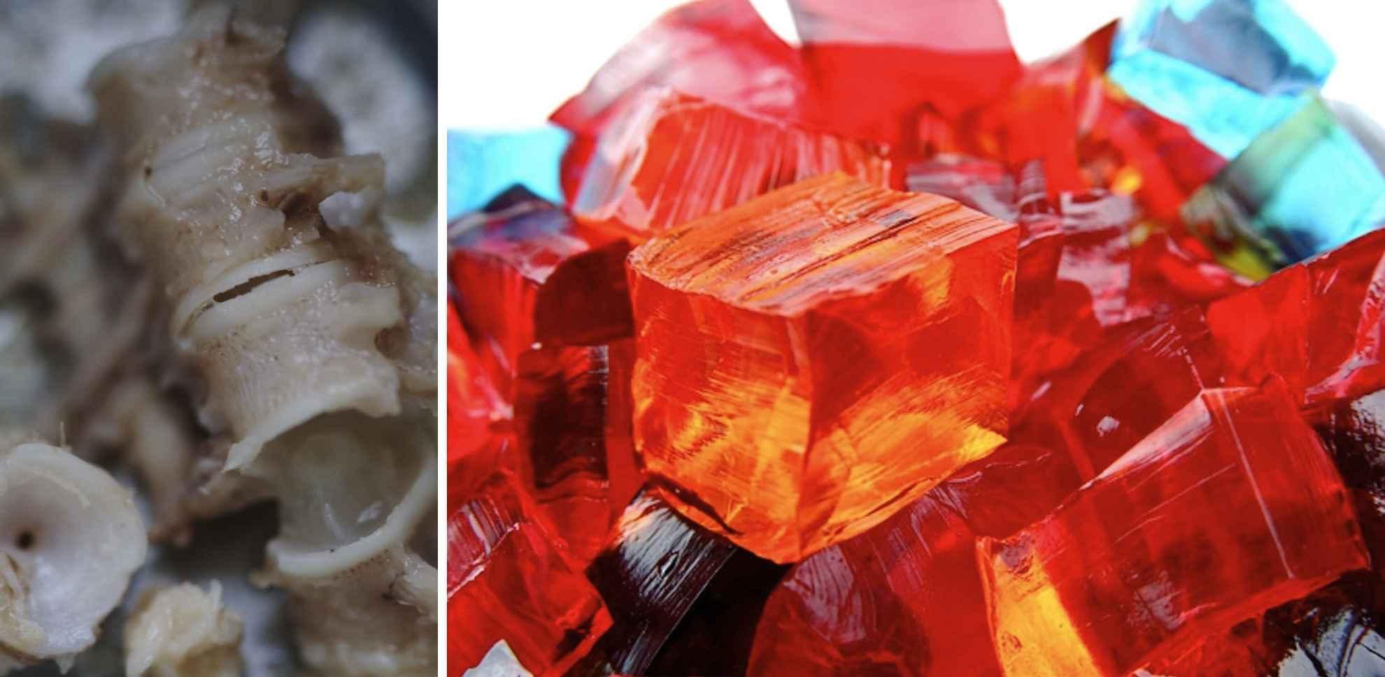 bones-jello