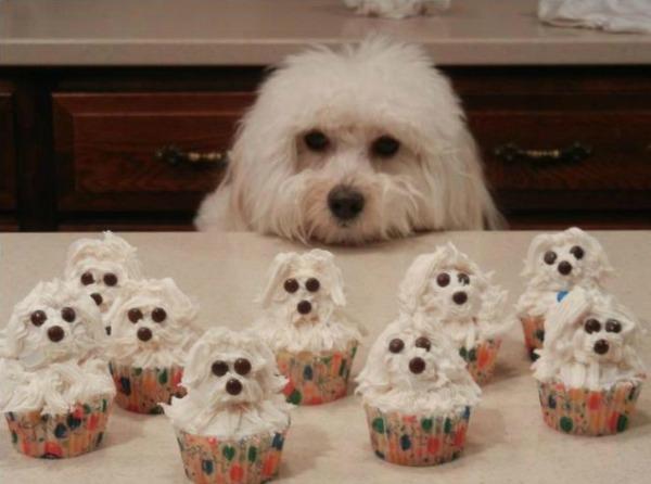 puppy-cupcake