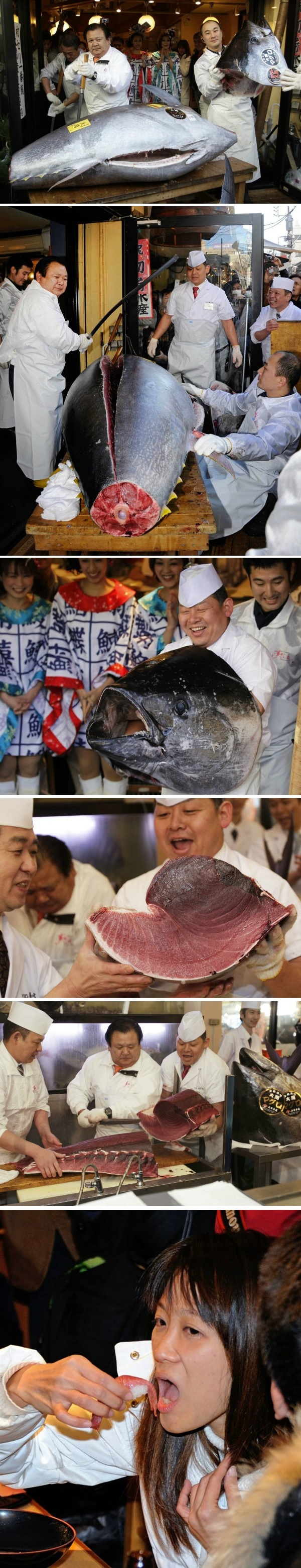 worlds-most-expensive-tuna
