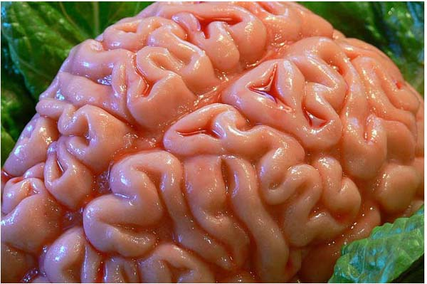 brains