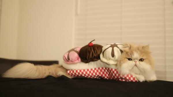 cat-banana-split