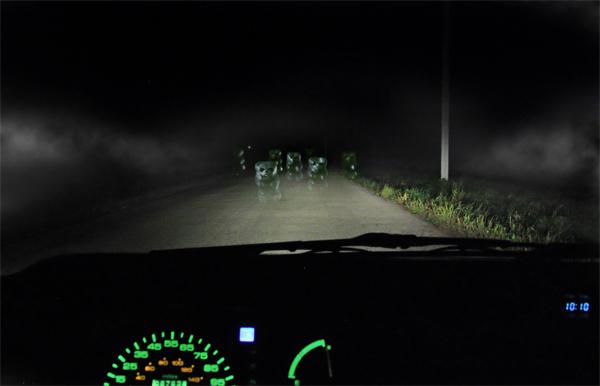 Bear eyes at night - photo#5