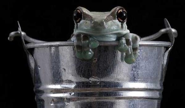 frogmilk