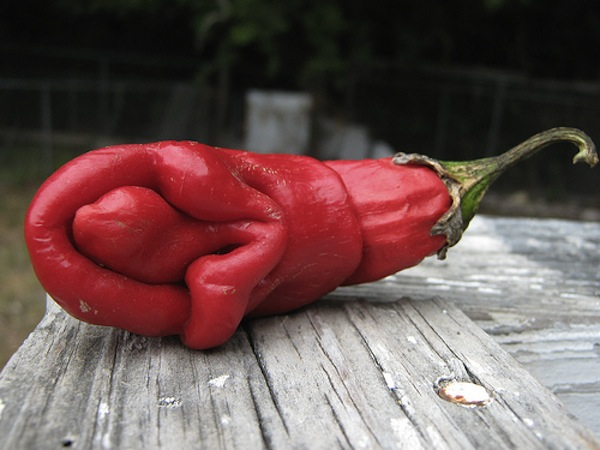 vagina-shaped-food-pepper-funny
