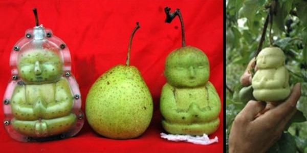 pears01