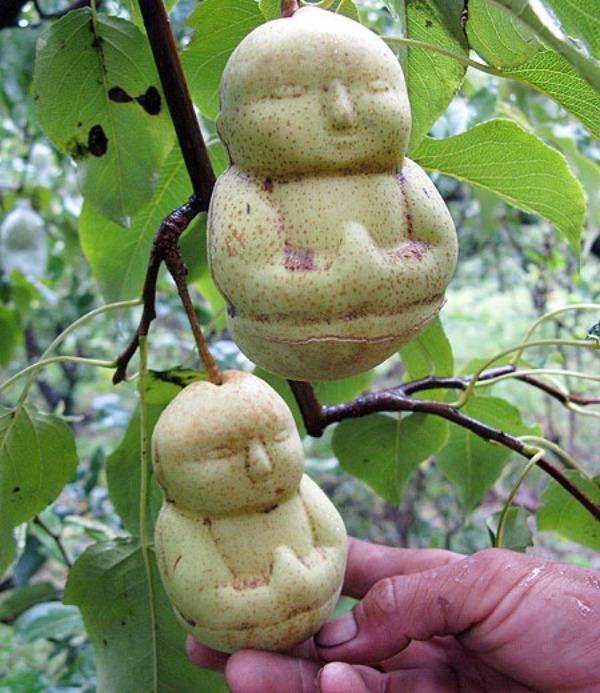 pears07