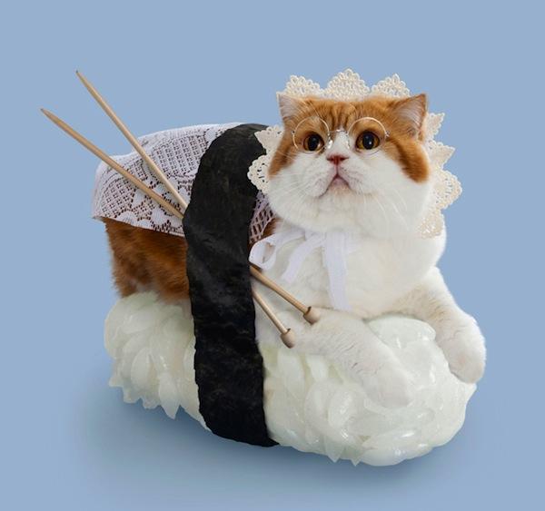 gatos sushi