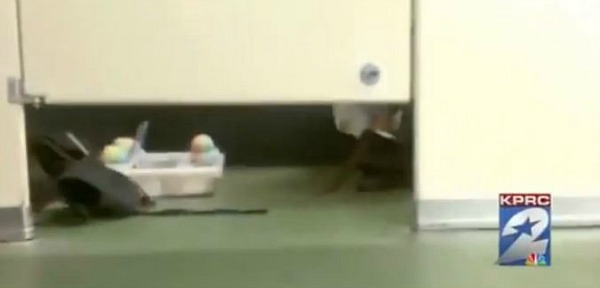 Stadium Vendor Caught Bringing Snow Cones Into Bathroom Stall